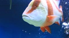 Aquarium fish closeup Stock Footage