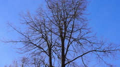 Bare tree branches (2) Stock Footage