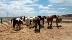 Mustangs at the Ranch Stock Footage