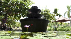 Dragonfly water lily fountain Stock Footage