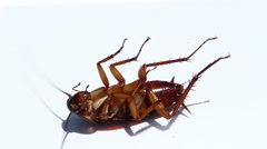Cockroaches are die after eating pesticides. Stock Footage