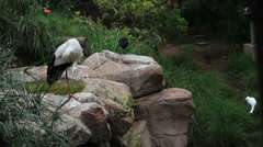 Exotic Bird Enclosure Stock Footage