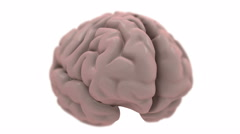 Brain, isolated on white, loops. Stock Footage