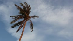 Palm tree on the wind with blue cloudy sky on the background - stock footage