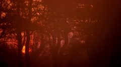 Red foggy sunrise and  and tree branches.4K (4096x2304)   Time lapse - stock footage