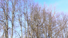 bare tree branches - stock footage