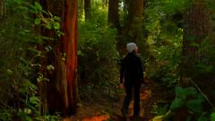 4K Rain Forest, Woman on Walk through Tall Trees and Green Foliage - stock footage