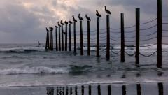 Pelicans on Posts at Ocean, Storm approaching Stock Footage