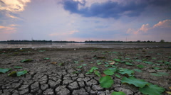 Time lapse dolly shot of lake, green lotus leaves, dried and cracked earth . Stock Footage