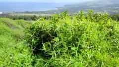 Easter Island Overlook 01 HD - stock footage
