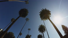 Driving Looking Up At Beverly Hills Palm Trees With Sun Stock Footage