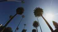 Stock Video Footage of Driving Looking Up At Beverly Hills Palm Trees With Sun