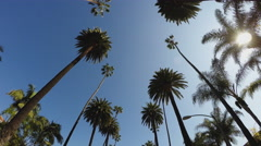 Driving Looking Up At Tall Palm Trees With Sun- Beverly Hills CA Stock Footage