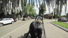 Black horse drawn carriage. View from inside of the carriage Stock Footage