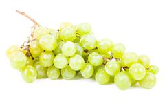 vine isolated on a white background - stock photo