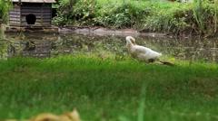 Duck Pond Slider Stock Footage