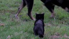 Cat and a dog in a meadow Stock Footage