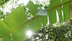 Sunlight through the green banana leaf. Jungle forest Stock Footage