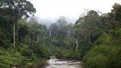Sabah Borneo Malaysia Asia Rainforest tree river Stock Footage