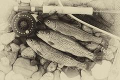Traditional Vintage trout fishing Stock Photos