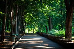 Beautiful avenue in to the park - stock photo