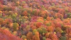Autumn foliage, Iwate Prefecture, Japan Stock Footage