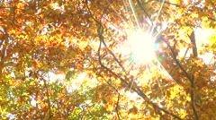 Autumn foliage Stock Footage