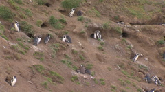 Penguins caves, Land of Fire Stock Footage