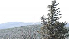 Wintergreen Tree On The Strong Wind - stock footage