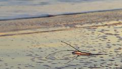 Branch on the seashore Stock Footage