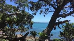 Trees at Motutapu Island Stock Footage
