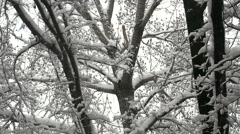 Beautiful Winter Forest Stock Footage