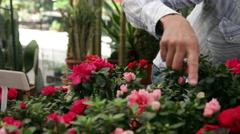 Father watching flowers with her little daughter - stock footage
