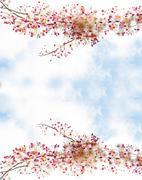 Sakura flowers blooming blossom in Ayuttaya, Thailand Stock Photos