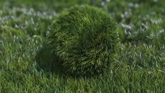 Stock After Effects of Bouncy Grass Ball Logo
