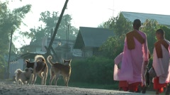 Lady monks in pink on a alms tour,Inle Lake,Burma Stock Footage