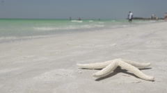 Starfish on the Beach of a Resort (11 of 13) Stock Footage