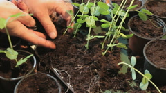 Repotting young plants Stock Footage