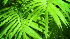 Moving Away from Wild Sunlit Ferns Stock Footage