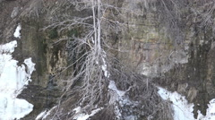 Trees on Rock Shelf / 4k nature footage Spring 2015 Stock Footage