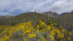 4K Blooming Yellow Flowers Arizona Desert Hills Stock Footage