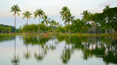 Palm Trees Reflected in a Pond in Southeast Asia Stock Footage