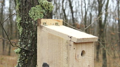 Young man puts new bird house nesting box on oak tree for small birds Stock Footage