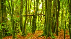 Mossy Tree Trunks in Jungle near Chiang Mai, Thailand Stock Footage