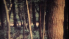 Mystical forest. Vintage 8mm Stock Footage