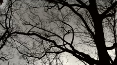 Windy day tree branches blowing storm - stock footage