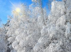 Winter landscape with snowy trees after snowstorm Stock Photos