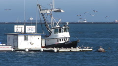 Commercial Fishing Boat Takes On Bait Stock Footage