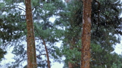 Tree in pine forest snow snowfall cold nature Stock Footage