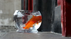 Carps swimming in glass fishbowl on windowsill Stock Footage